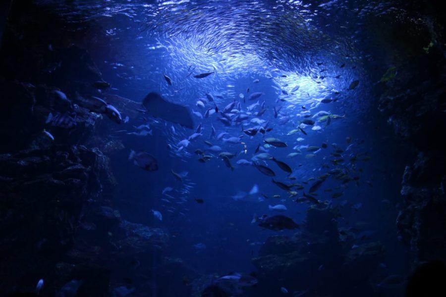 究極のヘアケア美容液!ラサーナ 海藻ヘアエッセンスは何が凄い?特徴や効果を徹底調査!