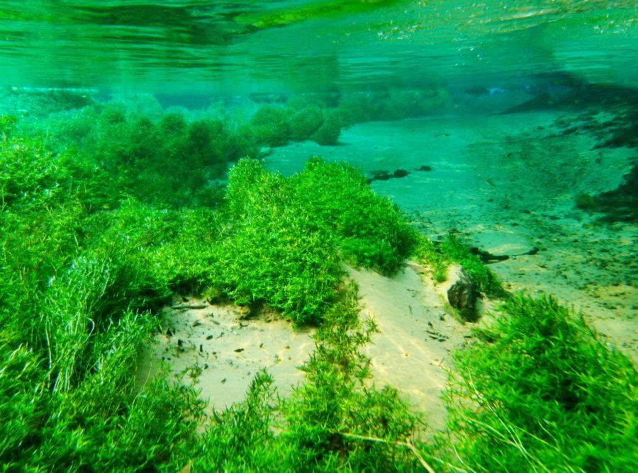 藻のすごい青汁の口コミと評判